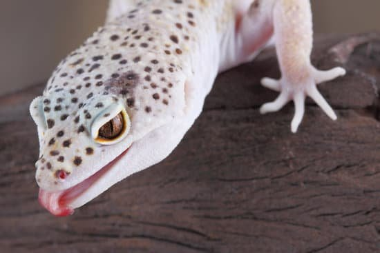 Can Leopard Geckos Eat Worms?